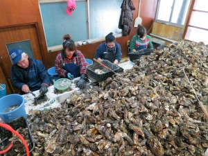 Japanese male oyster farmer and Chinese women employees shucking oysters. Source: Kumi Soejima
