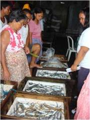 Women fish traders examine fish before the auction. Photo: N. Turgo