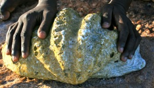 Old giant clam shell, Goulburn Island. Photo: Lisa Petheram.