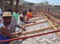 Men and women fish driers, Burundi. Source: FAO