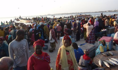 Busy beach landing for Hann Fish Market, Dakar, Senegal, April 2013. Women and men take over the fish handling and processing from the all-male captains and crews of the spectacular wooden fishing canoes.