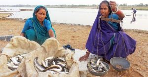 Women weighing riverine fish catch, India. Photo: Lalit Tyagi.