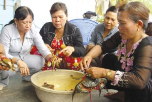 Mrs Xiem (Ca Mau, Vietnam), one of the largest crab farmers in Vietnam, and local women workers. Photo: Ha Thu http://hathutranslator.wordpress.com/2012/05/19/the-role-of-women-in-vietnamese-aquaculture/