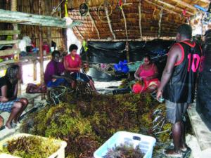 Seaweed farming Waigina, Choiseul Province, Solomon Islands. Photo by M. Kronen, SPC WIF25.