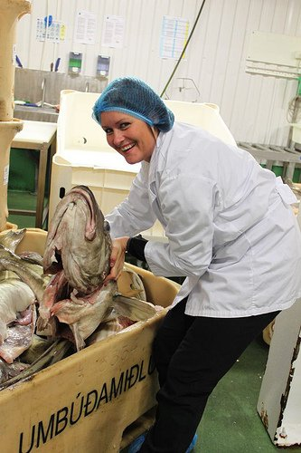 Worker in Marz, Iceland, factory, the only women created and led seafood exporting country in Iceland. Photo: Grapevine magazine, Iceland 2 Jan 2014.