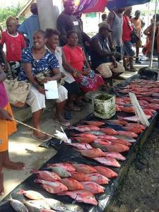 Women selling reef fish in Solomon Islands fish market. Photo: kate Barclay.