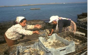 Women collecting oysters cultivated in the Qualidia Lagoon, Morocco. Photo: Giuseppe Bizzari, FAO.