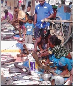 The Boring Road Crossing fish market in Patna, India. The number of women fish vendors has declined substantially. Photo: Bibha Kumar, from Yemaya 49 p. 5.