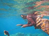 Woman diver, Atauro Island, Timor Leste. Photo: Wawata Topu, by Nelson Turquel.