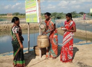 Mrs M Usha (center) weighing crabs for market. Photo: Dr B. Shanthi, CIBA, India.