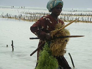 Farmer preparing to plant her crop, Zanzibar. Photo: Flower Msuya